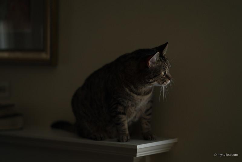 Pets-283.jpg