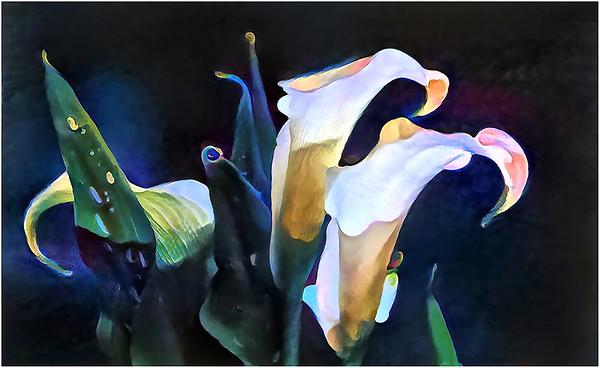 Callas Fantasy