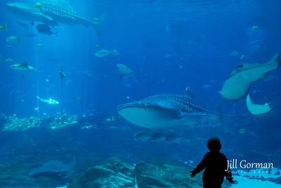 Aquarium and James' Birthday