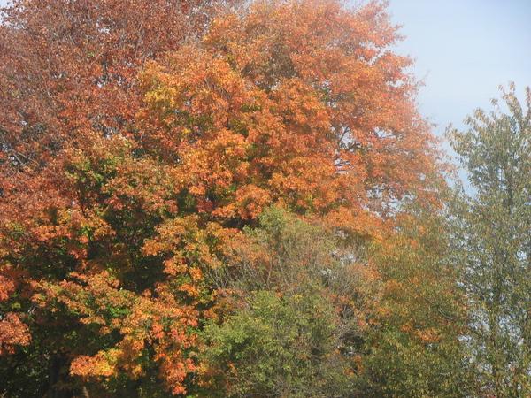 Fall pics 2008 045.jpg