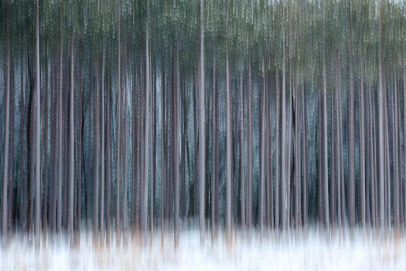 Pine Grove-2.jpg