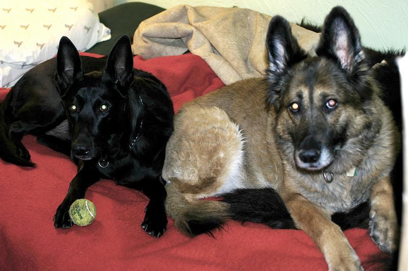 Arco and Niki