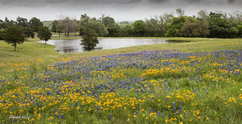 flowers & pond 040618.jpg