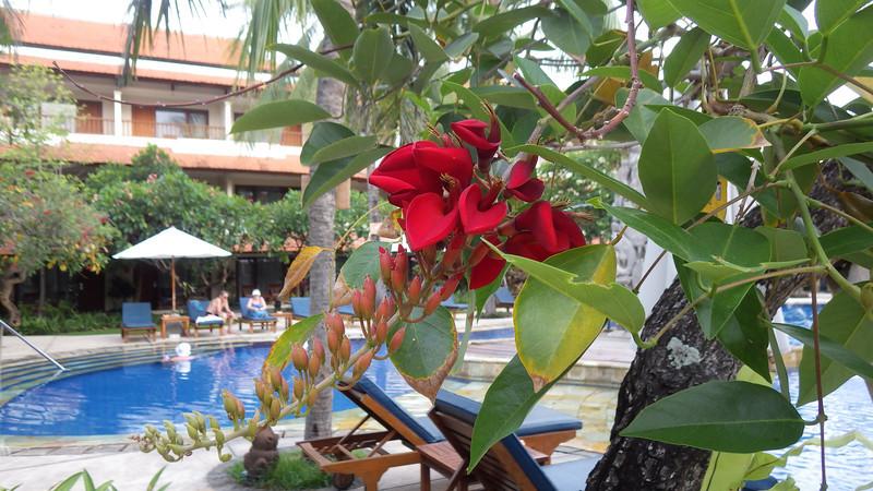 I was in nice Bali Rani Hotel (****).