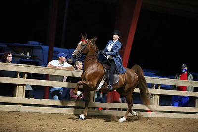 54) ASB Open 5-Gaited Show Pleasure