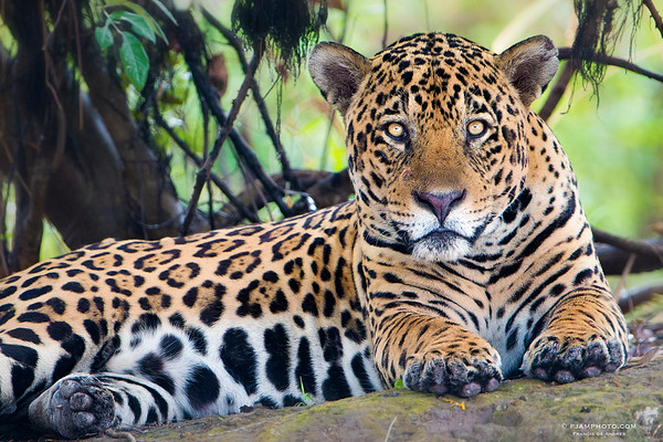 Pantanal (Brazil)