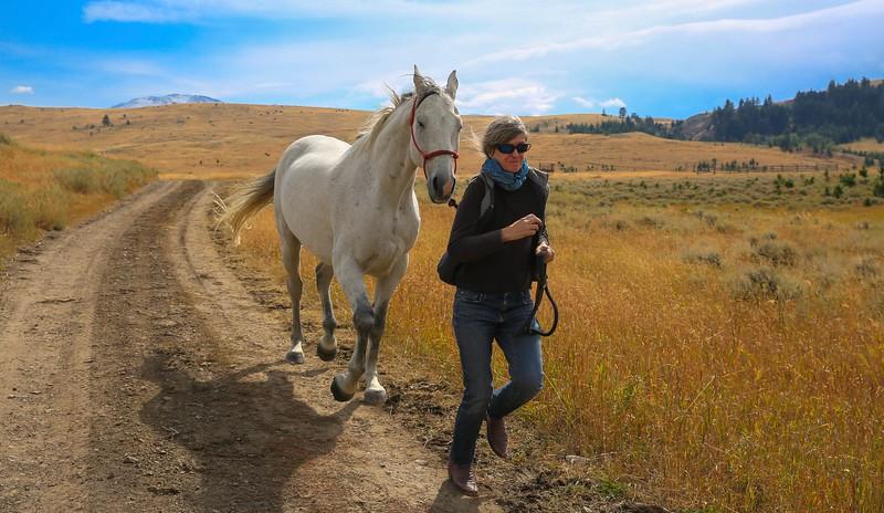 Horses 23.jpg