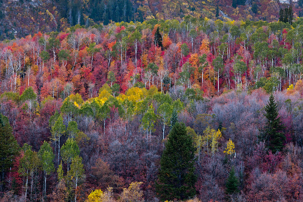 Wasatch Mountains UT Autumn Colors