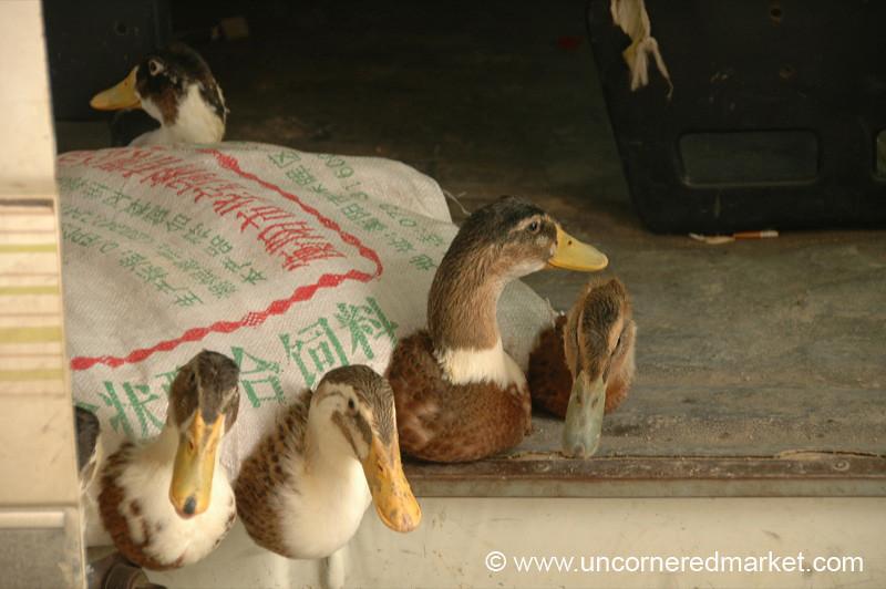 Bag of Ducks - Guizhou Province, China