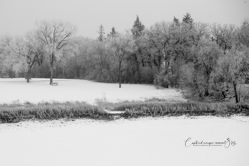 181212 Frosty 0005-2.jpg