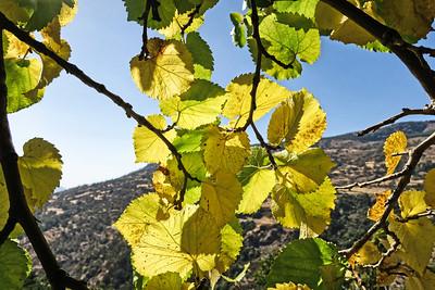 Walking in the Alpujarras week 15th October