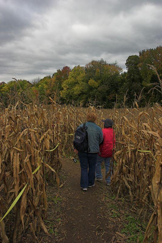 Into the corn maze