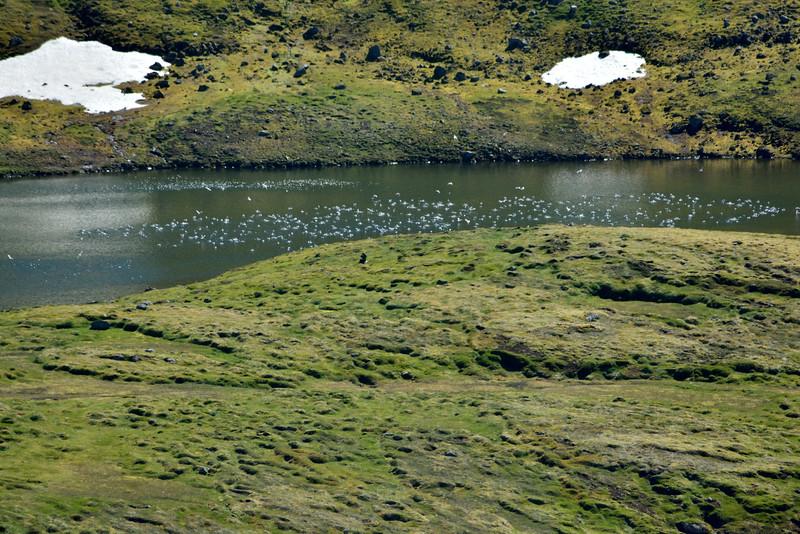 Fuglar á Miðdalsvatni