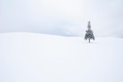 Furano-Biei-Hokkaido