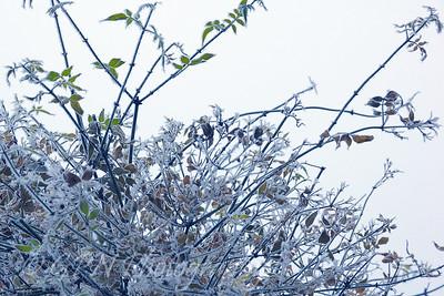 A Frosty Morning - Jan 2009