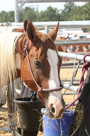 2010 Benson NC Mule Day