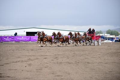 8 horse hitch