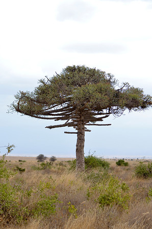 Landscape from Kenya & Tanzania