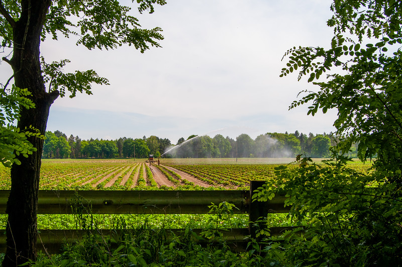 Nationaal Park Hoge Kempen - Duinengordel, omgeving Donderslag 39.jpg