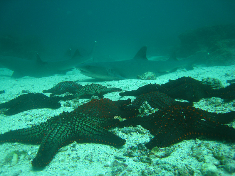 Diving in the Galapagos (146 of 392)