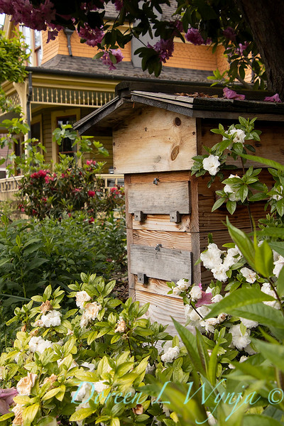 Bee hive box_1662.jpg