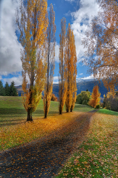 Dalefield in the Autumn