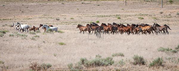 Ranch38-3115.jpg