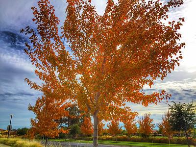 California Fall Colors 2014