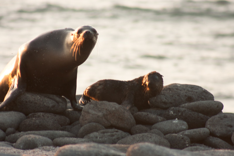 Journey into Baltra Island in the Galapagos Archipelago 45 Sea Lion Family Looking