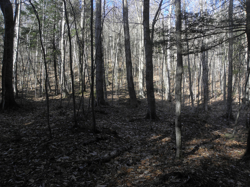 Digging the woods so far.JPG