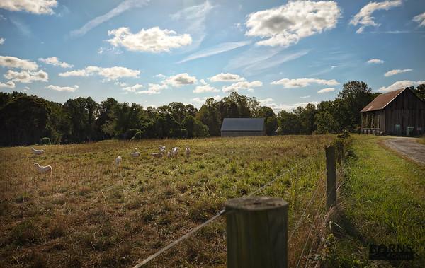 Monnett Farms - 9.19.19