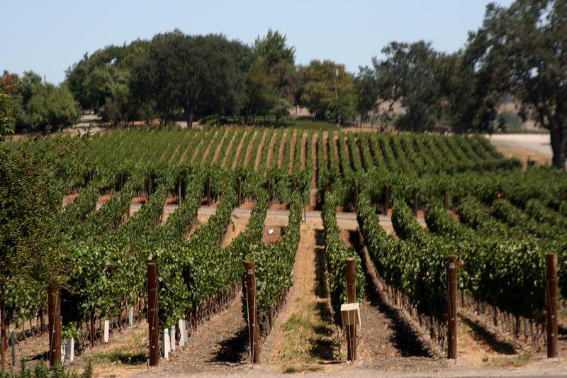 the vineyards.jpg