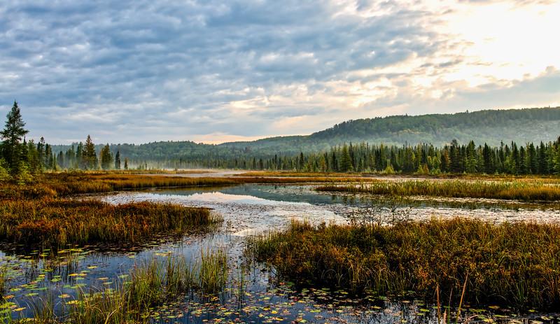 Sept 22-2017-spruce bog_12.jpg