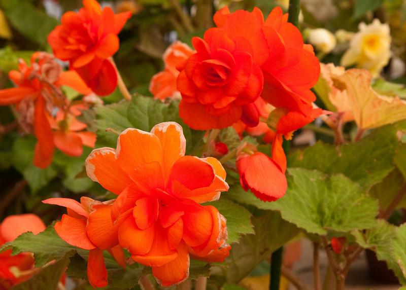 2009 09 06_White Flower Farm_0136_edited-1.jpg