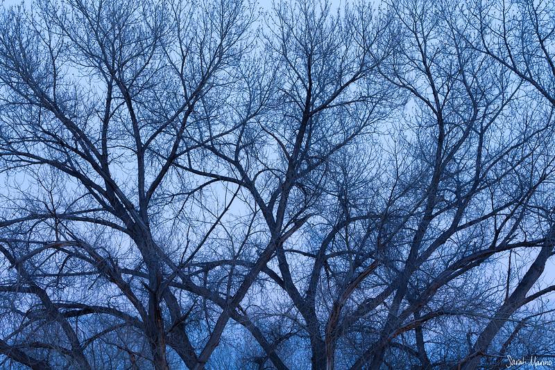 Winter's Limbs