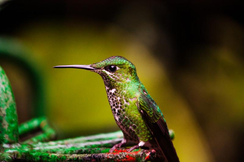 birds-1-3.jpg