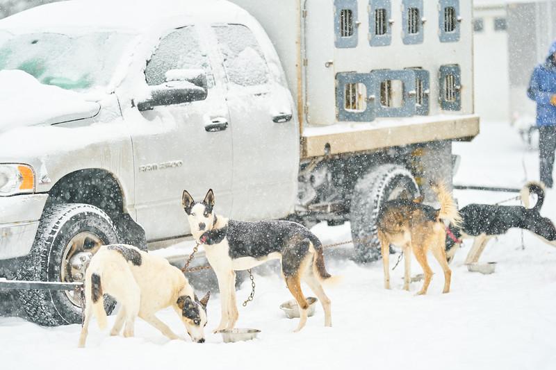 50    RobertEvansImagery.com IG @RobertEvansImagery   Klondike Dog Sled Race 2-9-2020.JPG