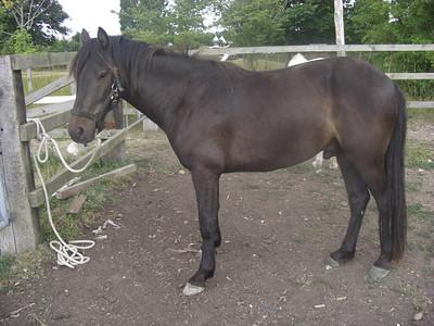 20_UNKNOWN Danish pony_T1
