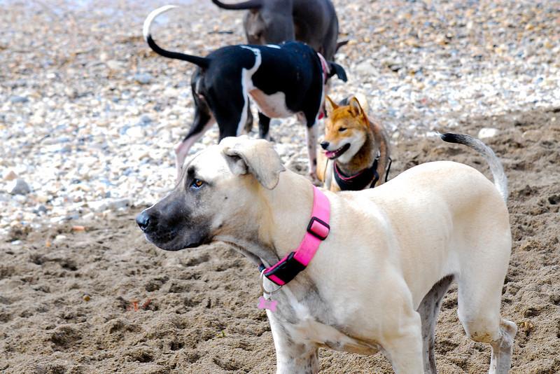 dogs_beach-021.jpg