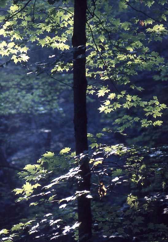 tree leaves light.jpg