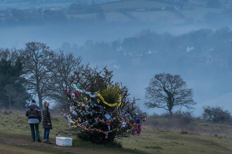 Dog's Christmas Tree-7608.jpg