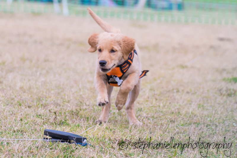Woofstock_carrollwood_tampa_2018_stephaniellen_photography_MG_8674.jpg