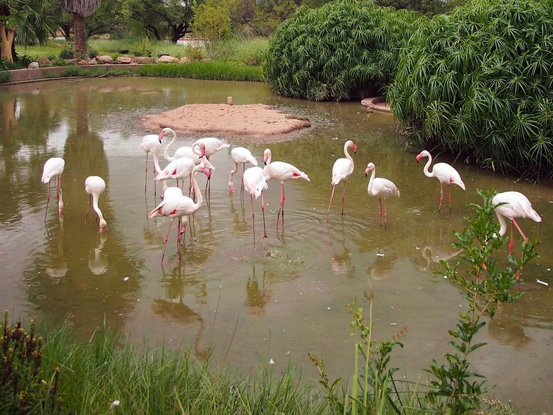 P3271113-flamingo-garden.JPG