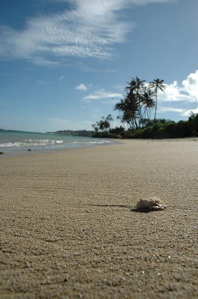 Hawaii - Kahala Beach-103.JPG