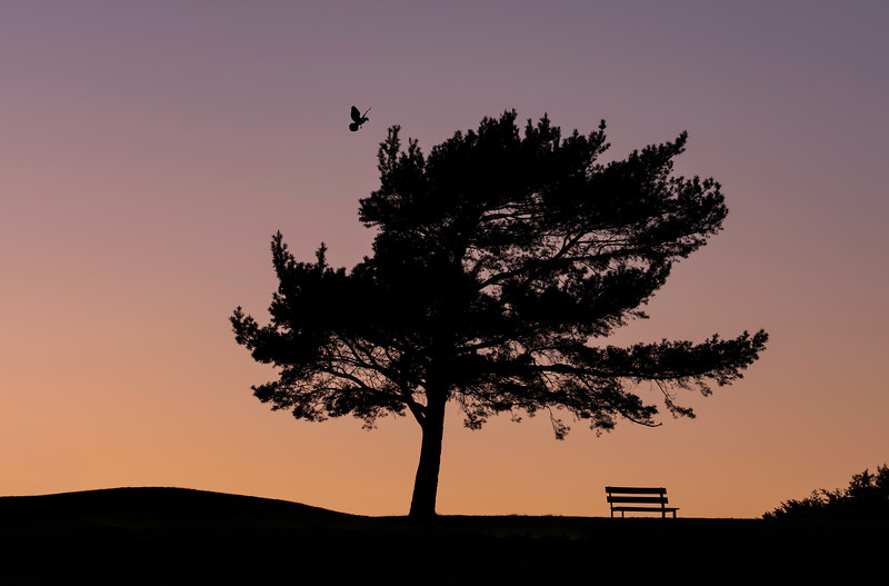 tree bird and bench silhouttes.jpg