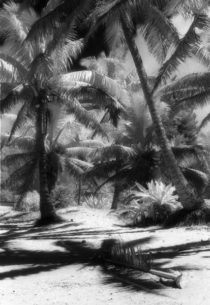 Crossed Palms 13x19.jpg