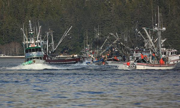 Sitka Sac Roe Herring Fishery