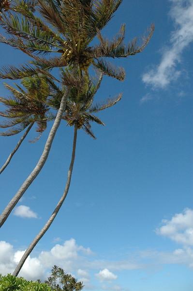 Hawaii - Kahala Beach-12.JPG