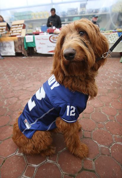 Dog in Tom Brady shirt Chelmsford 010419