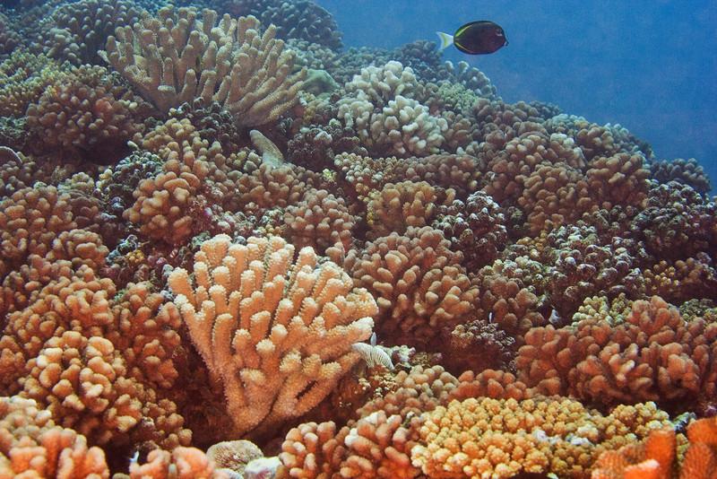 Corals 2.jpg